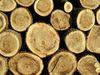 bois matériau de construction